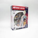青島文化教材社 FAME MASTER 4D VISION 人体解剖モデル 立体パズル No.20 全身解剖スケルトン