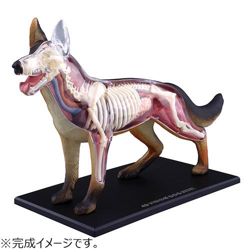 アオシマ 4D VISION 動物解剖 No.18 犬解剖モデル│パズル 立体パズル