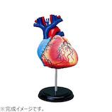 アオシマ 4D VISION 人体解剖 No.10 心臓解剖モデル│パズル 立体パズル
