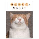 学研ステイフル サンキューカード メッセージブック E10072 ねこ