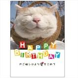 学研ステイフル かご猫 誕生日カード 豆ブック B50122 かご猫│カード・ポストカード バースデー・誕生日カード
