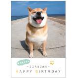 学研ステイフル 柴犬まる 誕生日カード 豆ブック B50123 柴犬まる