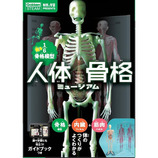 学研(Gakken) 科学と学習PRESENTS 人体骨格ミュージアム 光る1/6骨格模型 J750737│実験用品 ビーカー・フラスコ