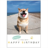 学研 MRUBDメッセージブック B10033 柴犬まる