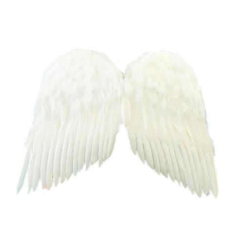 PA 天使の翼 L