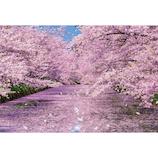 ビバリー 弘前公園の桜 51-251 1000ピース