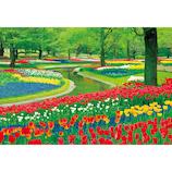 ビバリー チューリップ彩る公園 M81-577 1000ピース