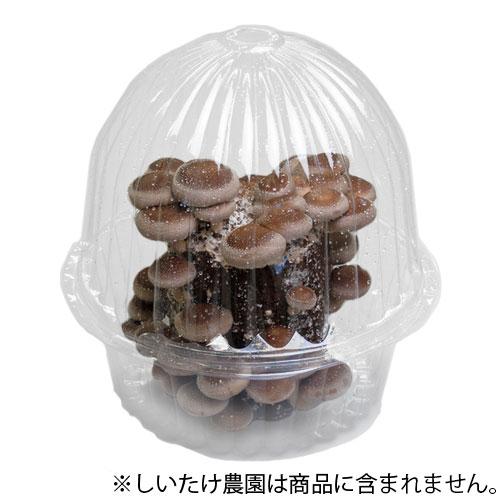 きのこ栽培容器 マッシュルームA