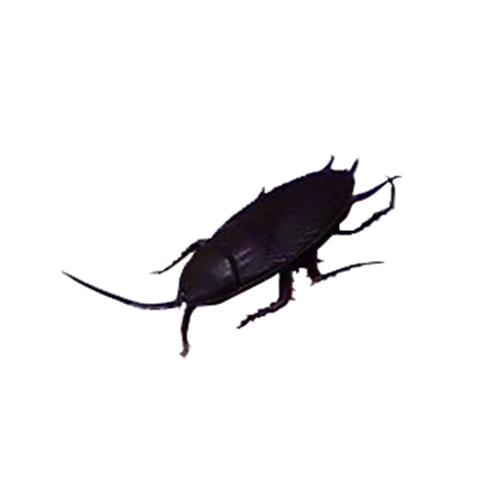 丸惣 イミテーション ゴキブリ