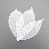 東京堂 ミニスケルトンリーフ6 DO51493-11