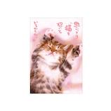 アクティブコーポレーション ネコポストカード PB-239│カード・ポストカード ポストカード(写真)