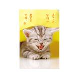 アクティブコーポレーション ネコポストカード PB-334│カード・ポストカード ポストカード(写真)