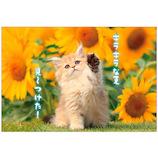 アクティブコーポレーション 夏柄ネコポストカード PB−500s│カード・ポストカード ポストカード(写真)