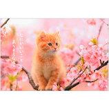 アクティブコーポレーション 春柄 ネコポストカード PB−509h│カード・ポストカード グリーティングカード