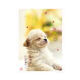 アクティブコーポレーション チワワポストカード PN-292│カード・ポストカード ポストカード(写真)