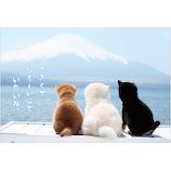 アクティブコーポレーション 柴犬ポストカード PN−525│カード・ポストカード ポストカード(写真)