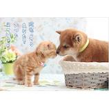 アクティブコーポレーション 柴犬ポストカード PN−528│カード・ポストカード ポストカード(写真)