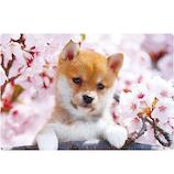 アクティブコーポレーション 春柄イヌ3Dポストカード PP−59h 桜/柴犬