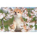 アクティブコーポレーション 春柄イヌ3Dポストカード PP−60h 桜/柴犬