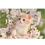 アクティブコーポレーション 春柄ネコ3Dポストカード PP−61h 桜/猫│カード・ポストカード ポストカード(写真)