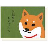 アクティブコーポレーション 柴田さんのバースデーカード GS-182 柴犬の柴田さん│カード・ポストカード バースデー・誕生日カード