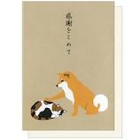 アクティブコーポレーション 柴田さんと三宅さんのサンキューカード GS-184 柴犬の柴田さんと三毛猫の三宅さん