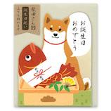 アクティブコーポレーション 柴田さんのダイカットミニカード バースデー A03-MG−19 柴犬の柴田さんと鯛