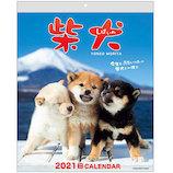 【2021年版・壁掛】 アクティブコーポレーション 壁掛けカレンダー 森田米雄・まるごと柴犬 ACL−11