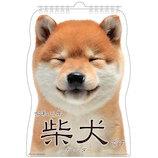 【2021年版・壁掛】 アクティブコーポレーション 壁掛けカレンダー 柴犬です ACL−65