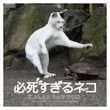 【2021年版・壁掛】辰巳出版 必死すぎるネコカレンダー 6089