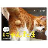 【2021年版・卓上】辰巳出版 開運!にゃんたまカレンダー 6100
