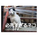 【2021年版・卓上】辰巳出版 卓上ミニ  必死すぎるネコ カレンダー 6101